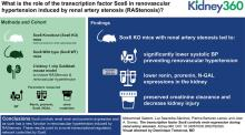 The Transcription Factor Sox6 Controls Renin Expression during Renal Artery Stenosis