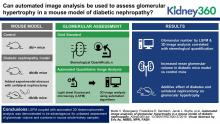 Automated Image Analyses of Glomerular Hypertrophy in a Mouse Model of Diabetic Nephropathy