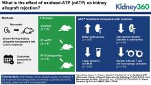 Oxidized-ATP Attenuates Kidney Allograft Rejection By Inhibiting T-Cell, B-Cell, And Macrophage Activity