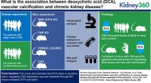 Free Deoxycholic Acid Exacerbates Vascular Calcification in CKD through ER Stress-Mediated ATF4 Activation